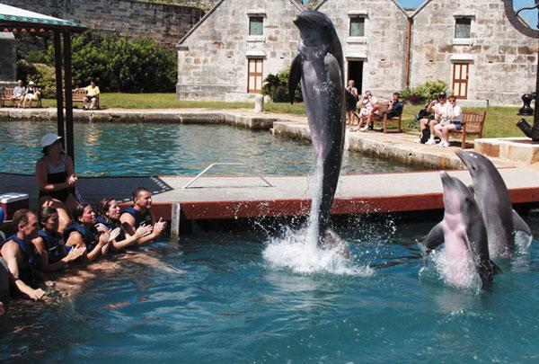 dolphin-quest-bermuda