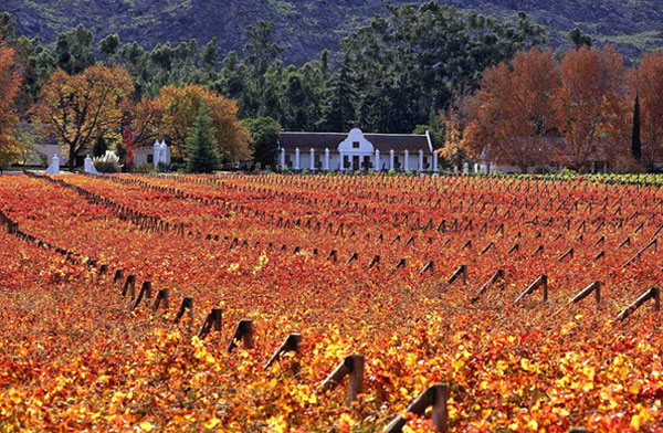 the-winelands